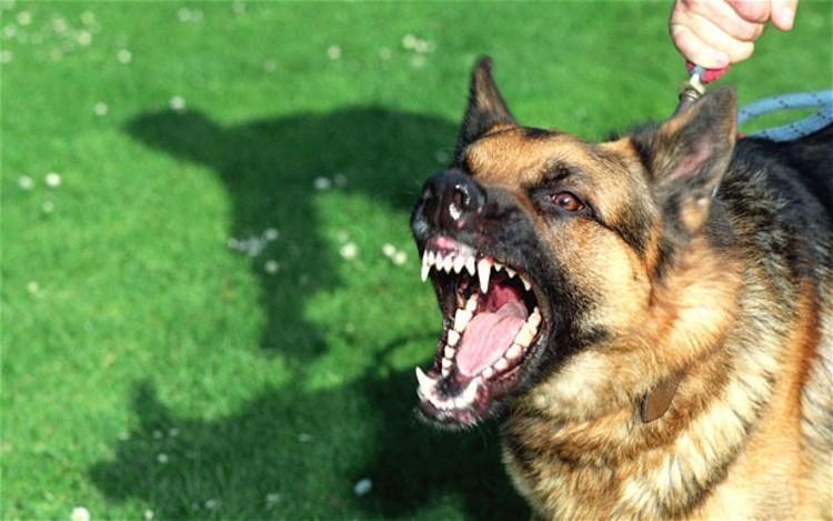 حمله دوباره سگ های هار به آبادی