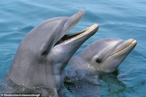 دلفین ها چگونه شبیه انسان هستند؟